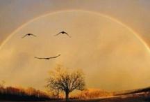 Smiles / nature, hidden smiles