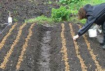 весна в огороде. краткие инструкции
