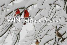 Winter Wonderland / by Blowfish Shoes