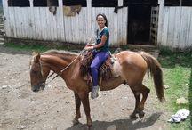 Cavalos Adoro / Cavalos