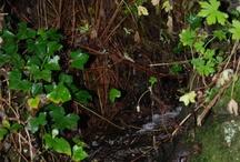 Springs and streams / by Viju Rajgopal