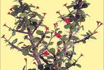 Plants & Pots / Home plants and pots I find interesting. + instructions. / by François Hamel