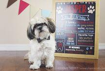 Dog First Birthday