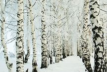 vinter-mys<333
