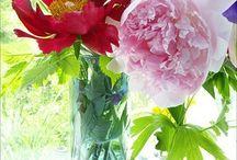 Shabby Garden Living {Yard Love}