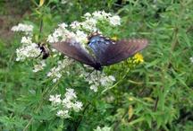 Flutter-by's / by Gin Klima