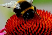 Bees and interesting insects
