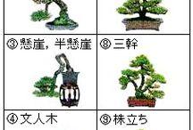 techniques bonsai