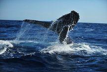 Los Cabos Wildlife & Nature