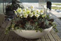 Kompozycje roślinne - biel