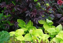 Plants: Foliage Combinations / Plant partnerships featuring lovely leafy plants