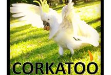 Corkatoo. / This board is dedicated to a bird I once knew.  That bird was called Corkatoo.