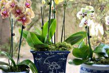 F  Lotus, Magnolia,Waterlilies,Orchids