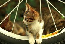 Meowmania-Curious Cat Community
