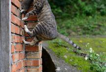 Mom's cat  / Cats