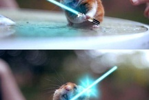 Hamster / by Andrea Beck