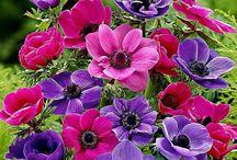 flores da natura / Bragança