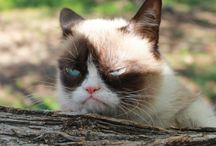 A Grumpy Soundtrack (PG-rated version) / Because I think a good Internet meme should have some theme music.  But Grumpy Cat probably don't care. #ILoveGrumpyCat #EvenThoughSheHatesEveryone  / by Herr Mango