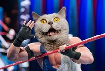 WWE Superstars with Cat Heads / The Internet loves cat photos.  We agree. Here are WWE Superstars with Cat Heads.