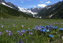 Spring in Italy - Piedmont / Spring in Val Pellice - Piemonte Italy
