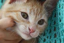 Nestum, my favourite cat