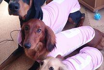 dog wear - tops トップス / フルオブビガーの犬服 トップス画像 イメージ