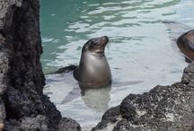 Galapagos Islands / On many person's travel bucket list, an expedition to Galapagos is an adventure not to be missed. Contact Acendas Travel to make this dream come true! 866-448-8747. acendasvacations.com