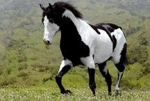 A horse of course / by Morgan McDaniel