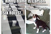 Dog shaming / Funny very funny