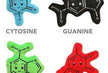 Nukleinsavak- az öröklődés molekulái