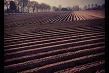 Landbouw Agriculture