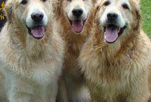 Bichitos adorables / Perros, gatos, tigres y demás criaturas  del mundo animal que me encantan.