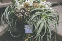 floral board: tillandsia / by The Perfect Petal
