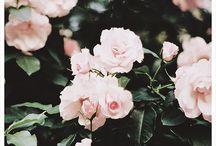 Fleur. / Flowers