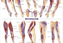 Yours Trigger Points