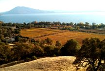 Lake County CA Travel Highlights / Lake County (just 2.5 hours north of San Francisco) is a hidden travel gem.  Wonderful outdoor and water sports, great wineries, good food and comfortable unique lodging.  These are our favorite places. / by Tallman Hotel & Blue Wing Saloon