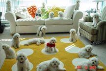 Pejsci/Dogs / Psi