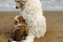 Veľké psy