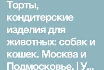 день рождения котика)