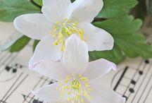Flowers / Love flowers