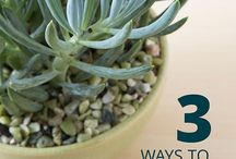 Why so succulent? / Gardening tips
