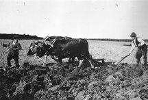 fotos antigas agricultura