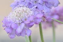好きな花◡̈❁*.。❁*.:。❁ ♡