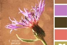 Colour Palettes / by Meika de Vries