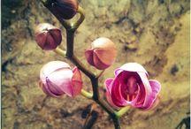 Flores e bichos