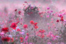 Bloemenvelden