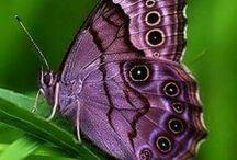 Motyle świata