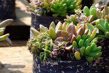 Planten / Graag simpel en makkelijk te onderhouden.