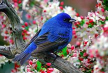 Birds /                   / by Anne Riches