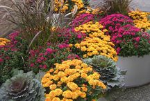 Gardens in FALL / Gardens come alive with FALL color!